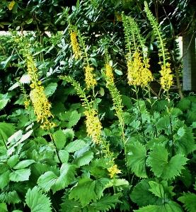 Tall Perennials Mike 39 S Garden Top 5 Plants