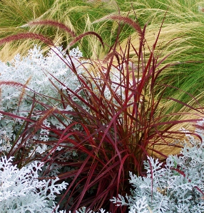 Annual Ornamental Grasses Mike S Garden Top 5 Plants