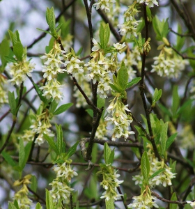 Native Coastal Bc Shrubs Mikes Garden Top 5 Plants