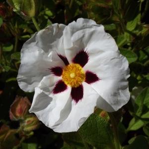 Mike S Garden Top 5 Plants Helping Gardeners Help