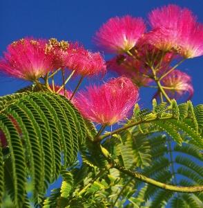 Elements of an exotic garden ii mikes garden top 5 plants elements of an exotic garden ii mightylinksfo
