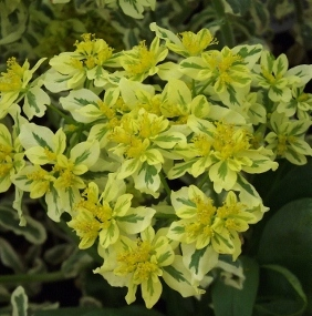 Yellow Flowered Perennials Iii Mike S Garden Top 5 Plants