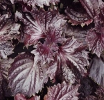 herbredshiso (300x289)