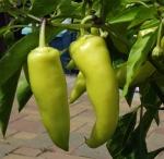 peppersweetbanana (300x292)