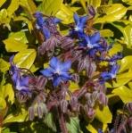 herbsborage (297x300)