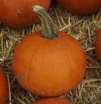 pumpkinlittleoctobersmallsugar (292x300)